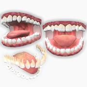 Boca com dentes maxilares 3d model