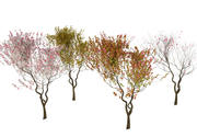 4 säsonger amelanchier lamarckii bush pack 3d model