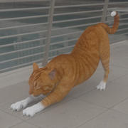 CATS-016 Cat Stretching 3d model