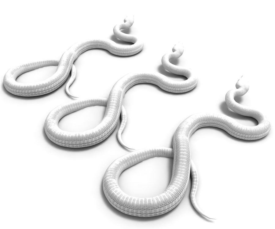 Snake (Realistic) royalty-free 3d model - Preview no. 8