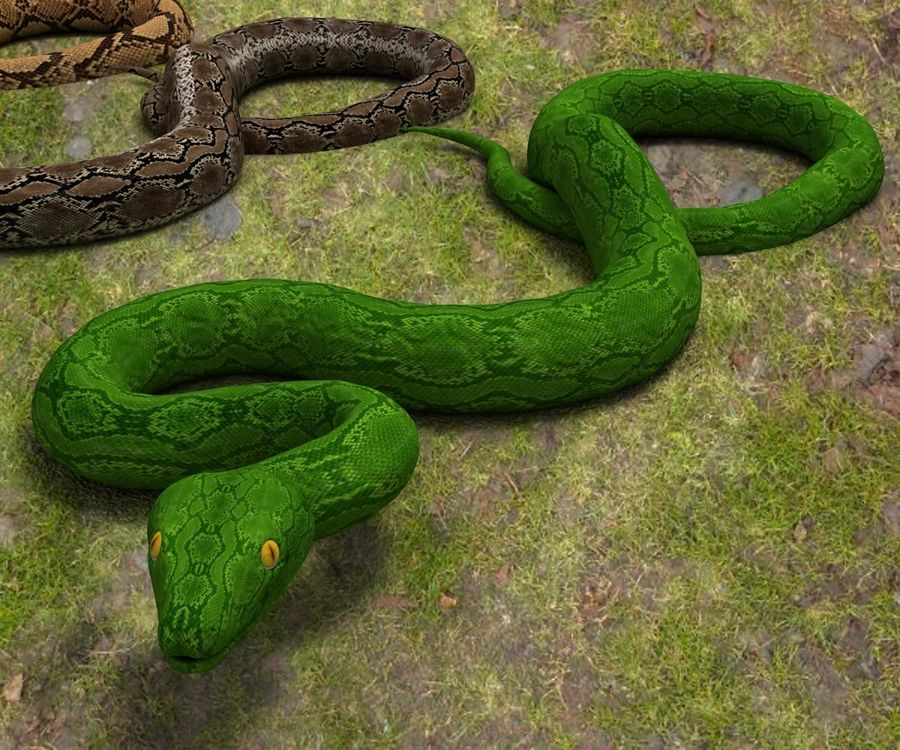 Snake (Realistic) royalty-free 3d model - Preview no. 3