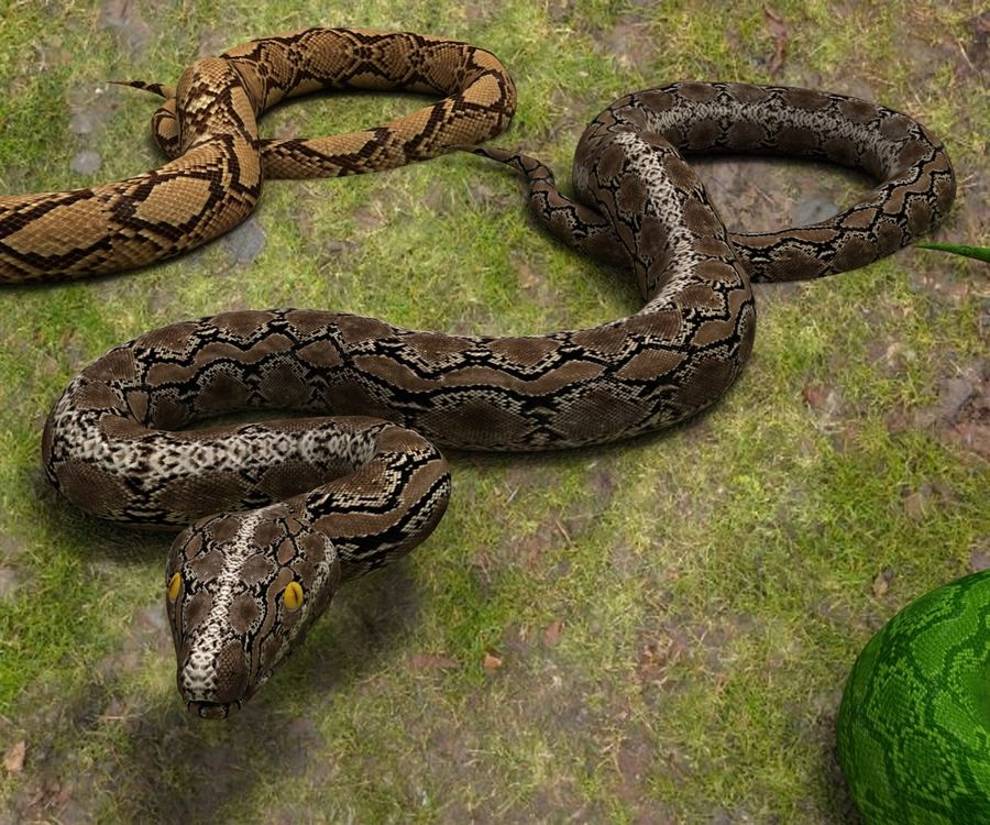 Snake (Realistic) royalty-free 3d model - Preview no. 4