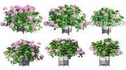 Växter hortensia set 06 3d model
