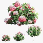 Planten Hydrangea set 11 3d model