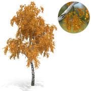 Árvore de vidoeiro no 3 versão de outono 3d model