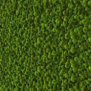 稳定苔藓2 3d model
