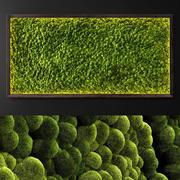 苔藓墙2 3d model