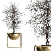 Branching tree 3d model