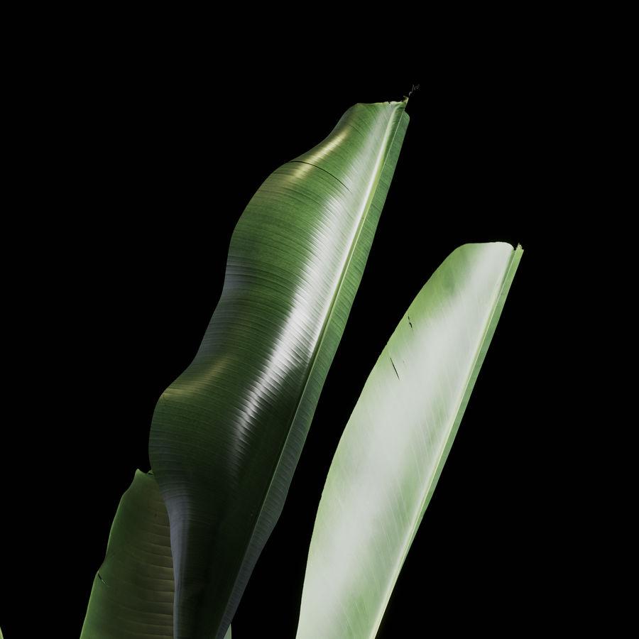 Indoor Plants Set 01 royalty-free 3d model - Preview no. 9