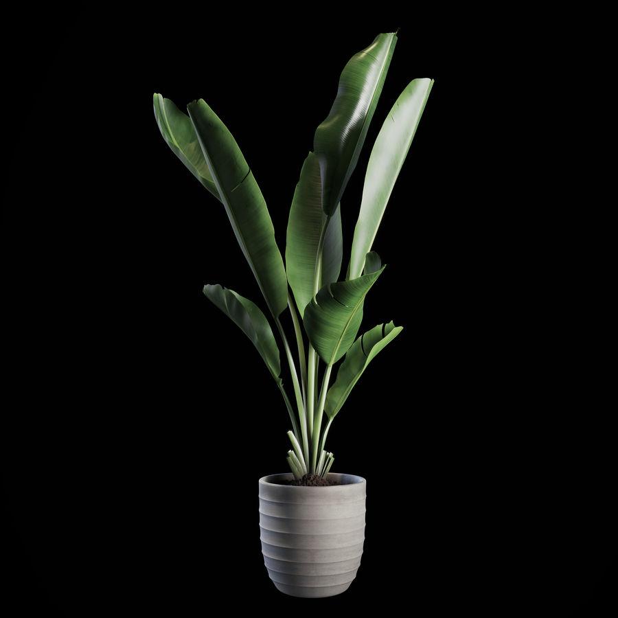 Indoor Plants Set 01 royalty-free 3d model - Preview no. 1