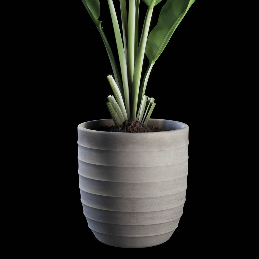 Indoor Plants Set 01 royalty-free 3d model - Preview no. 3