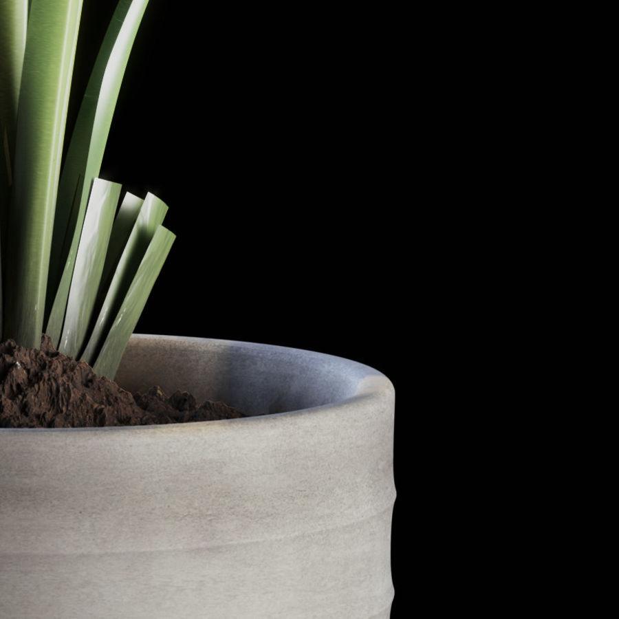Indoor Plants Set 01 royalty-free 3d model - Preview no. 7