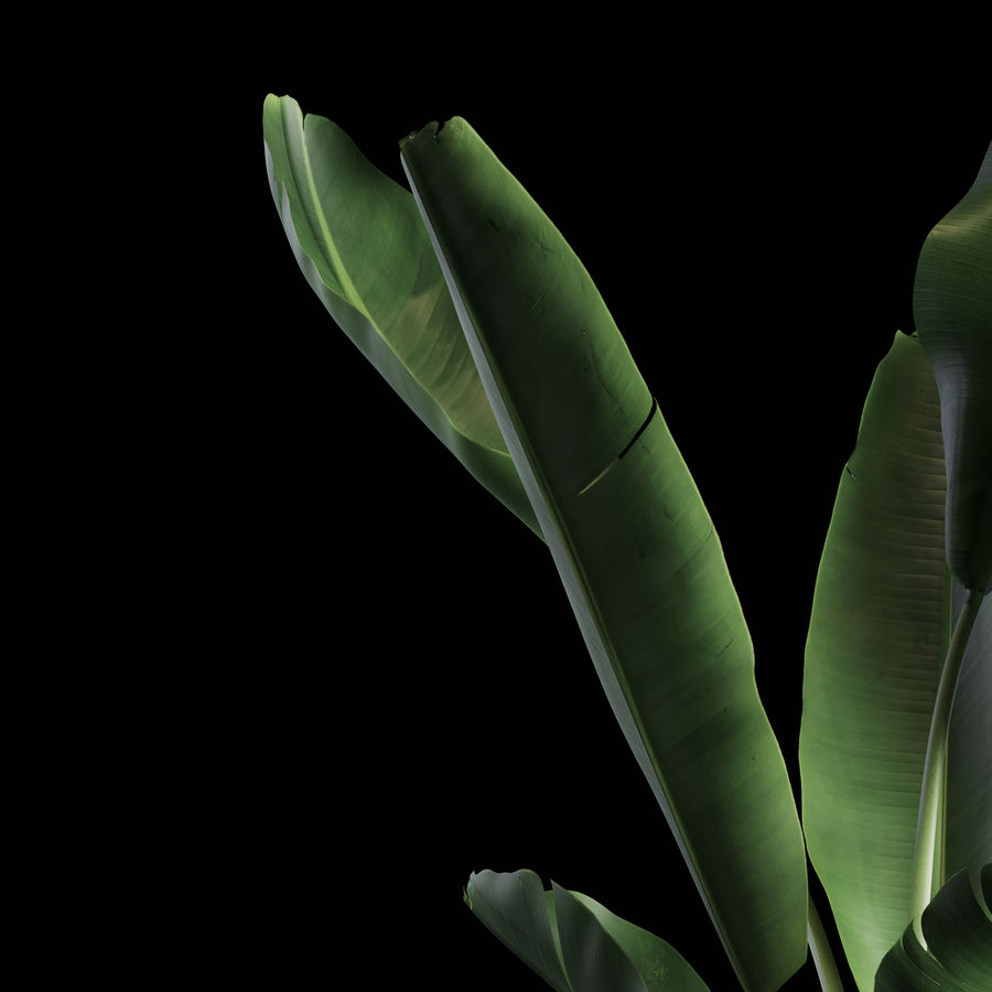 Indoor Plants Set 01 royalty-free 3d model - Preview no. 5