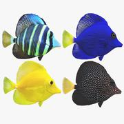 Zebrasoma珊瑚礁鱼 3d model