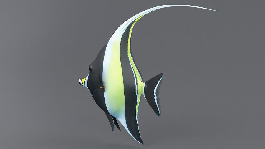 Zanclus Cornutus Korallenriff Fisch royalty-free 3d model - Preview no. 7