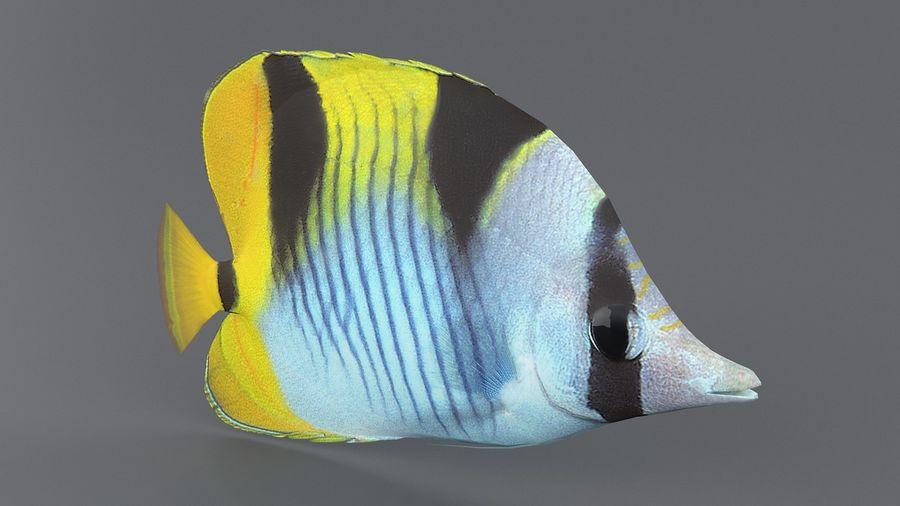 Schmetterlingskorallenrifffisch royalty-free 3d model - Preview no. 2