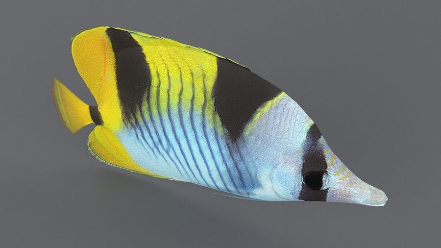 Schmetterlingskorallenrifffisch royalty-free 3d model - Preview no. 7