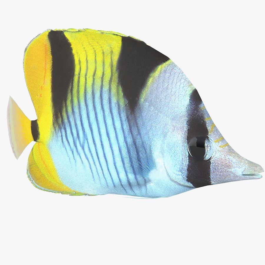 Schmetterlingskorallenrifffisch royalty-free 3d model - Preview no. 1