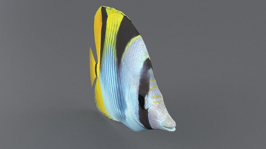 Schmetterlingskorallenrifffisch royalty-free 3d model - Preview no. 3