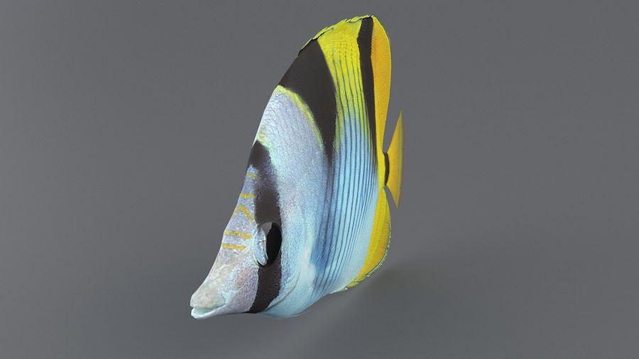 Schmetterlingskorallenrifffisch royalty-free 3d model - Preview no. 4