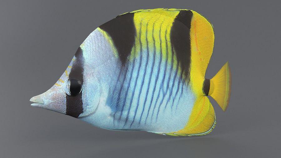 Schmetterlingskorallenrifffisch royalty-free 3d model - Preview no. 5