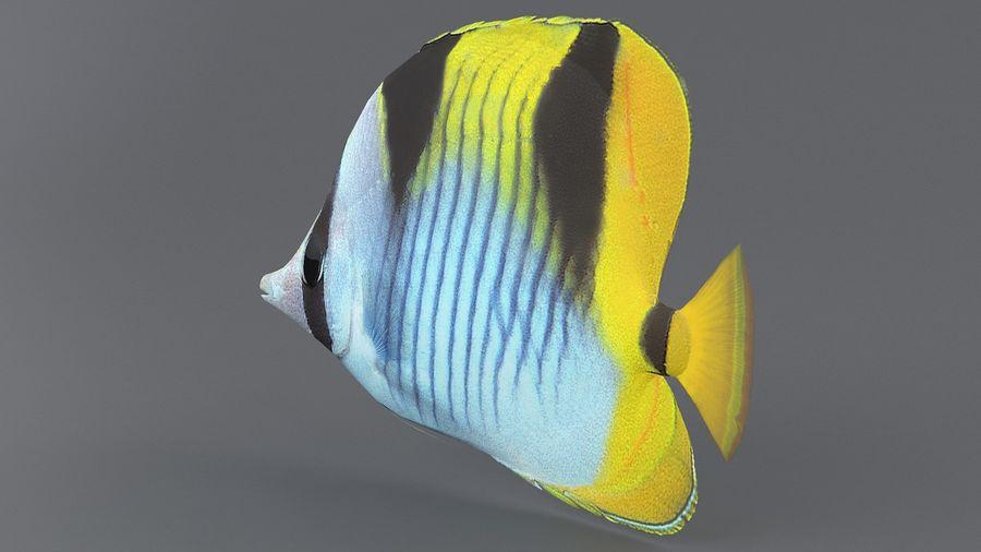 Schmetterlingskorallenrifffisch royalty-free 3d model - Preview no. 6