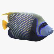 Pomacanthus Imperator Peces De Arrecife De Coral modelo 3d