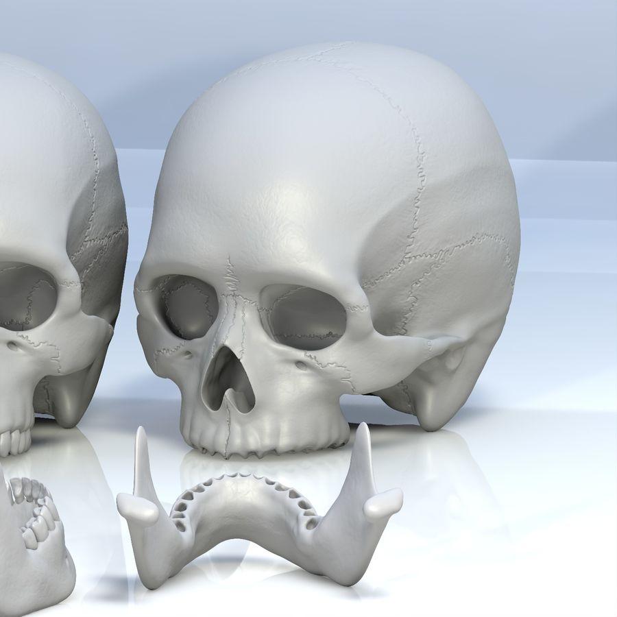 Человеческий череп royalty-free 3d model - Preview no. 19