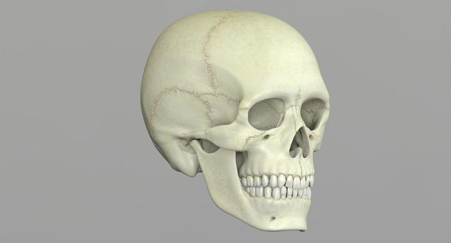 Человеческий череп royalty-free 3d model - Preview no. 21