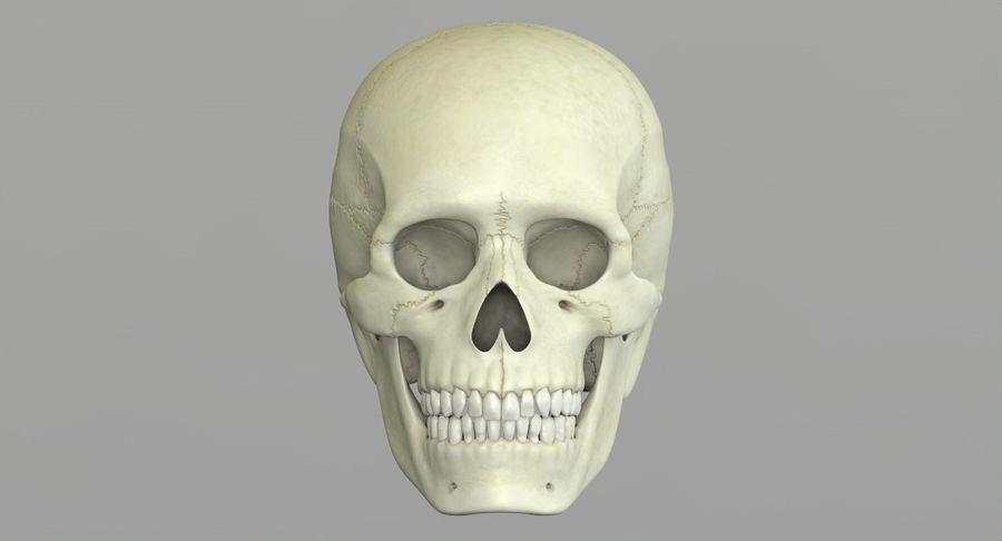 Человеческий череп royalty-free 3d model - Preview no. 20