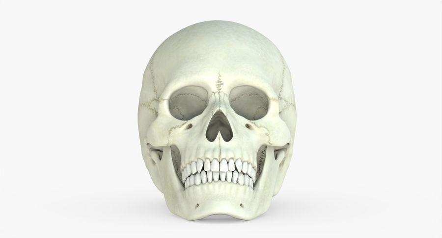 Человеческий череп royalty-free 3d model - Preview no. 34