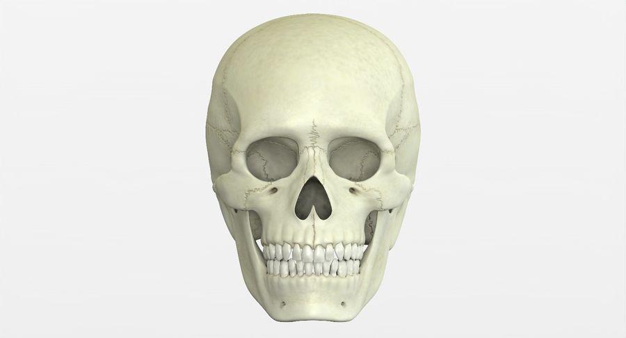 Человеческий череп royalty-free 3d model - Preview no. 3