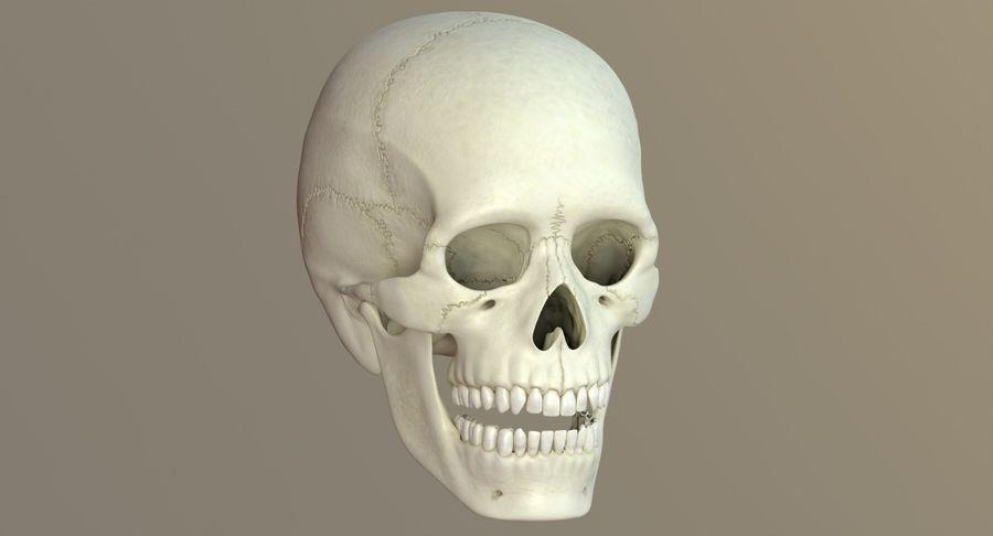 Человеческий череп royalty-free 3d model - Preview no. 35