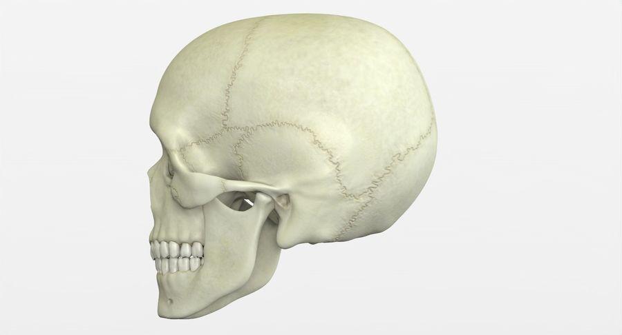 Человеческий череп royalty-free 3d model - Preview no. 9