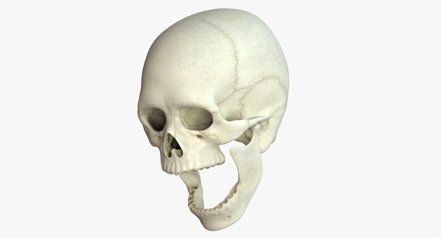 Человеческий череп royalty-free 3d model - Preview no. 14