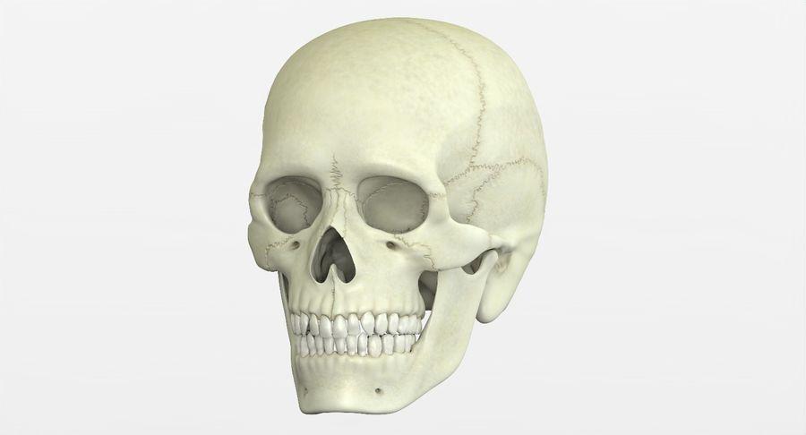 Человеческий череп royalty-free 3d model - Preview no. 4
