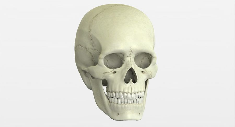 Человеческий череп royalty-free 3d model - Preview no. 38