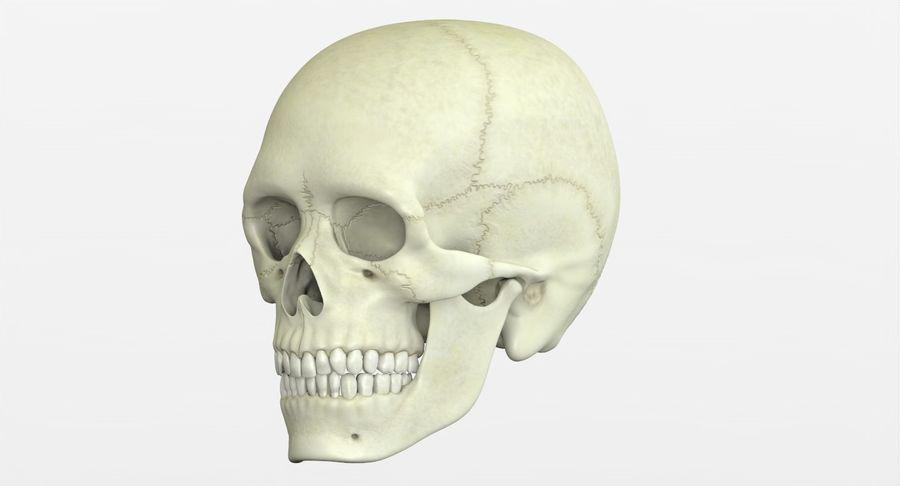 Человеческий череп royalty-free 3d model - Preview no. 5