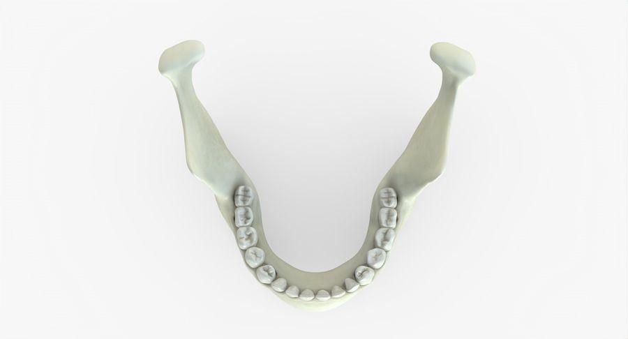 Человеческий череп royalty-free 3d model - Preview no. 31