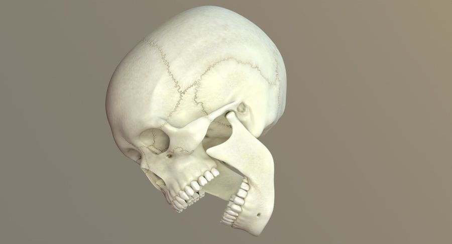 Человеческий череп royalty-free 3d model - Preview no. 36