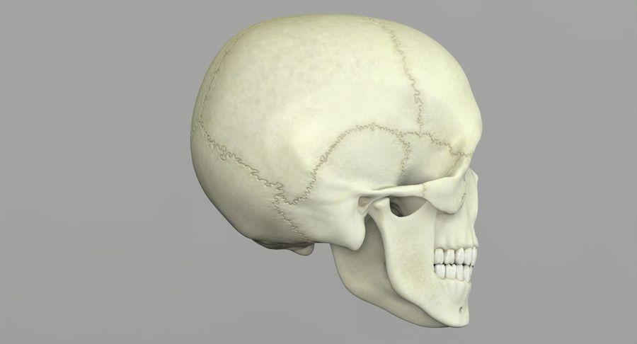 Человеческий череп royalty-free 3d model - Preview no. 22