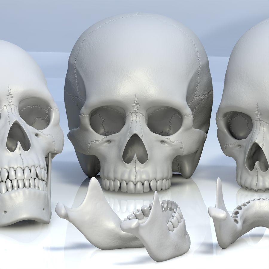 Человеческий череп royalty-free 3d model - Preview no. 18