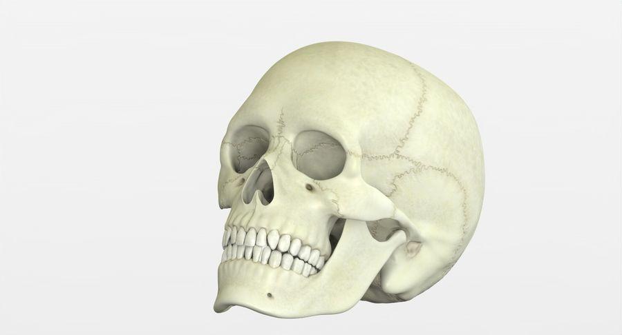 Человеческий череп royalty-free 3d model - Preview no. 27