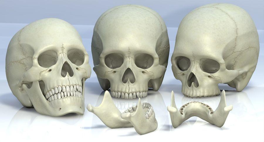Человеческий череп royalty-free 3d model - Preview no. 15