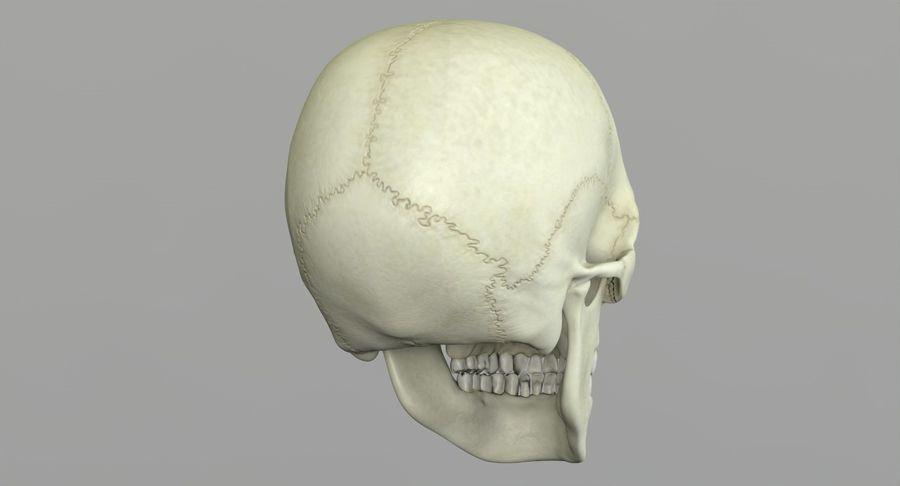 Человеческий череп royalty-free 3d model - Preview no. 23