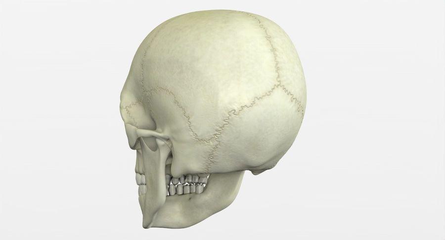 Человеческий череп royalty-free 3d model - Preview no. 11