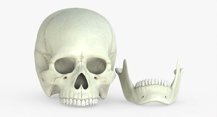 Человеческий череп royalty-free 3d model - Preview no. 28