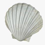 Concha de mar modelo 3d