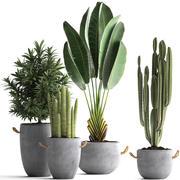 エキゾチックな植物のコレクション434 3d model