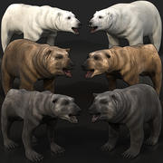 Bear Megapack Collection Grizzly Polar Black 3d model
